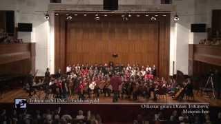 "Fields of gold - Sting - Tamara Milošević i Orkestar Gitara ""Dušan Trifunović"""