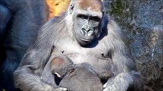 リキくんは生後4ヶ月をすぎて活動もかなり活発に。手ブレすみません。 1...