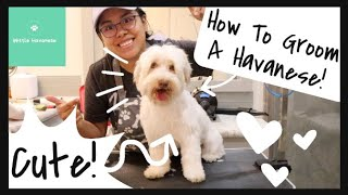 Full Havanese Groom (Dexter) | Wittle Havanese