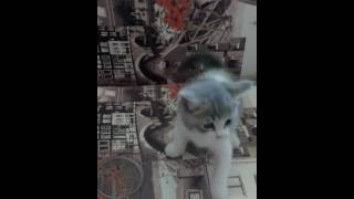 продажа котенка