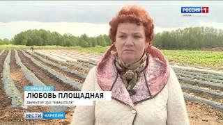 «Вести-Карелия». 27.06.2017