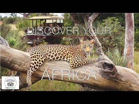 Lion World Travel: Affordable Luxury African Safaris