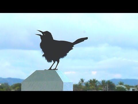 Antigua 2013 Holiday video. Wildlife and stunning views