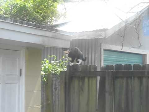 clumsy cat jumps onto roof
