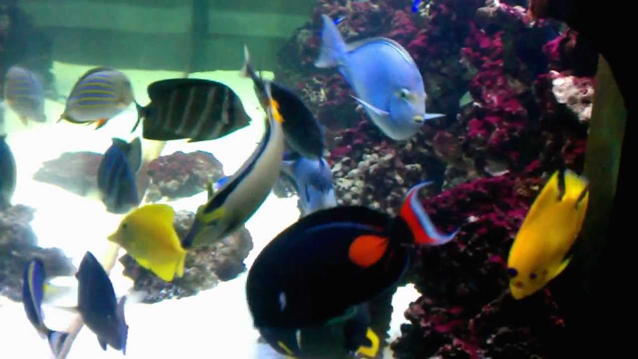 375 gallon saltwater fish only aquarium fish tank youtube for Fish only saltwater tank