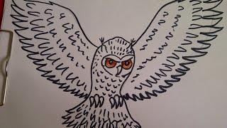 Уроки рисования для начинающих. Как нарисовать сову.   Рисуем  животных и птиц(Здравствуйте! Предлагаю вашему вниманию видеоролик, где я показываю, как очень просто нарисовать сову...., 2015-07-27T20:43:02.000Z)