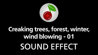 Creaking trees, forest, winter, wind blowing 01, sound effect