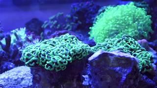 Die TOP 20 Meerwasser Tiere