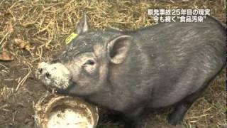 20111218b福島第一原発20km圏内の光景『特命報道記者X 2011』
