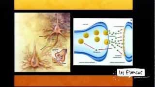 Les apprentissages, détour par les neurosciences