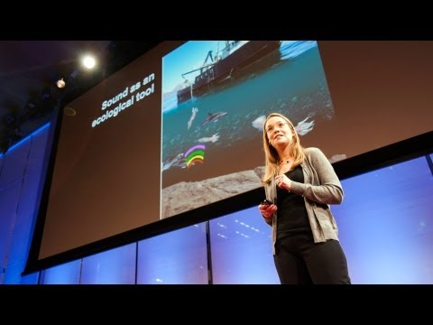 Video image: How giant sea creatures eat tiny sea creatures - Kelly Benoit-Bird