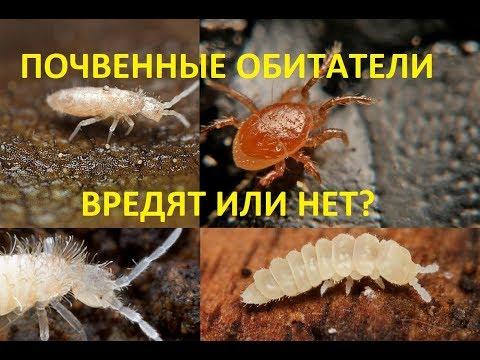 Вопрос: Как избавиться от насекомых с помощью растений?