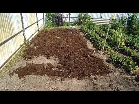 Вопрос: В каком месте на участке лучше всего посадить клубнику?