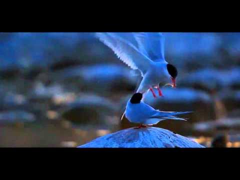 Birds of the Archipelago
