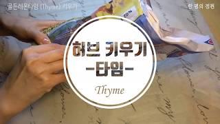 허브키우기 - 타임 (Thyme)/수경재배