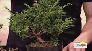 Escape from your troubles by pruning tiny, tiny trees.
