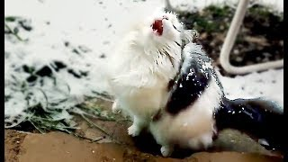 CATS IN SNOW   FUNNY CATS COMPILATION