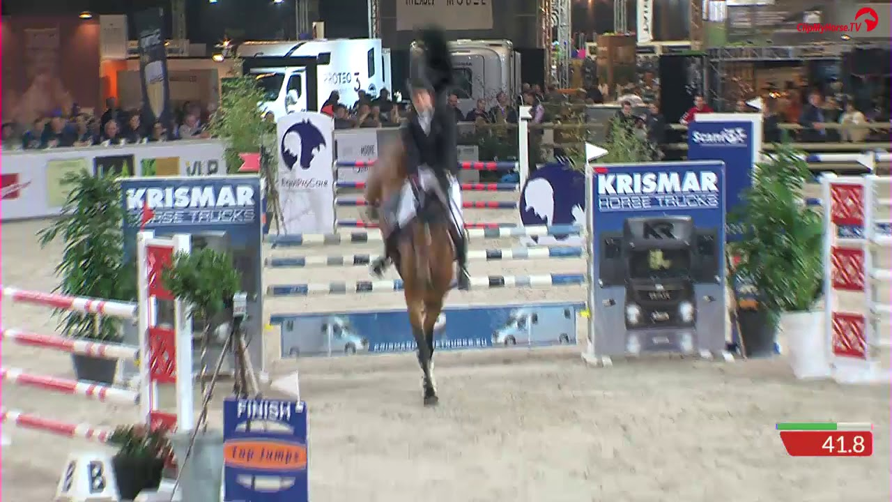 Amadeo van 't Vossenhof z stallion competition Gent 2019