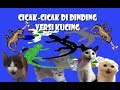 Cicak-Cicak Di Dinding - Versi Kucing (Animal Cover)