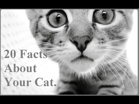 20 Facts About Your Cat - Things you must know !