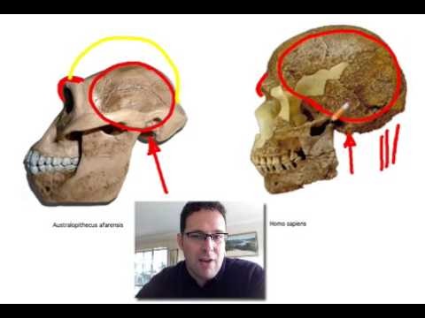 Skullcast: comparison of hominin skulls
