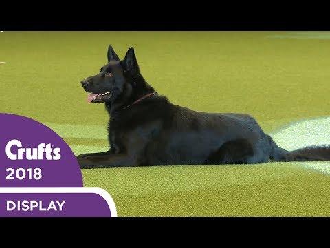 Dog Activities Display | Crufts 2018