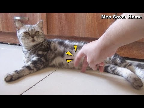 My Fingers Tried To Play A Trick On Cat !