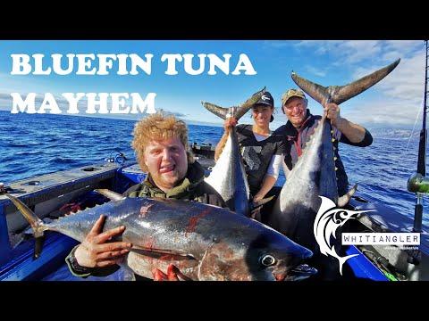 Bluefin Tuna Mayhem - Catching Bucket List Fish In Our Stabicraft 2250 - Whitiangler Life