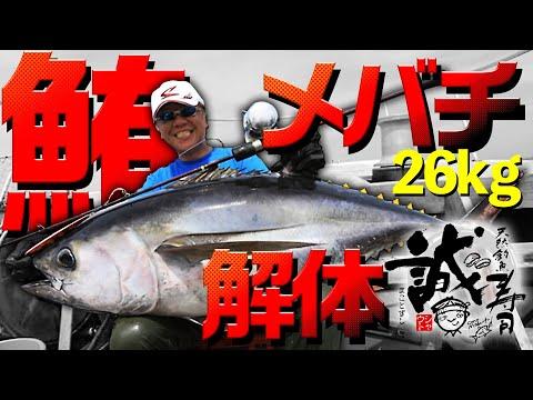 誠寿司Vol.2 メバチマグロ26キロを食べる。マグロ料理&実食 キハダジギング