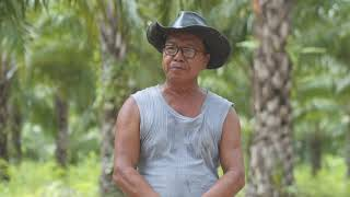 Oil Palm Development in Mizoram