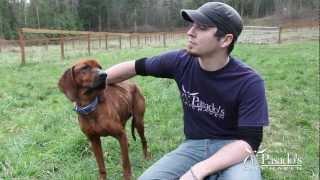 Adopt Rusty, Pasado s Safe Haven.mp4
