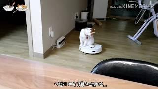 로봇청소기(치후360) 타고 노는 고양이 솔