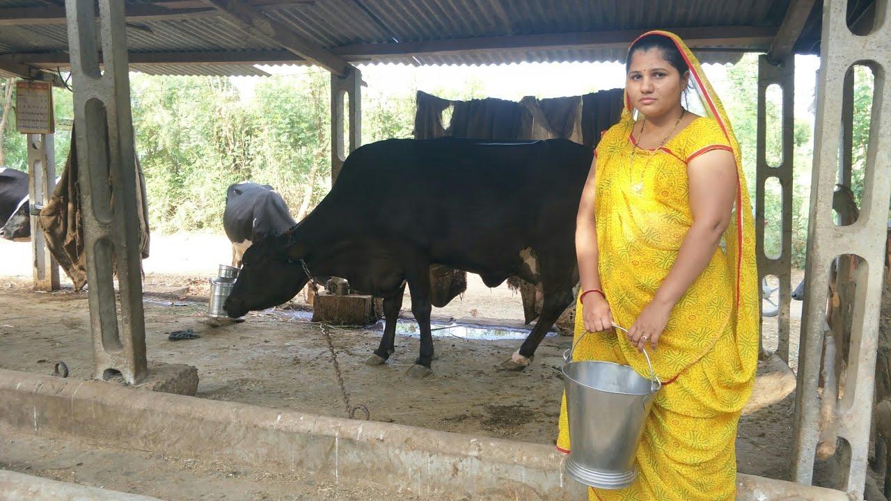 Woman Milked Like Cow