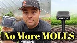 No More MOLES in the Garden or Yard!
