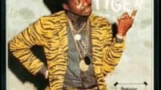 zebra vs tiger reggae jamaica @madwhitejam
