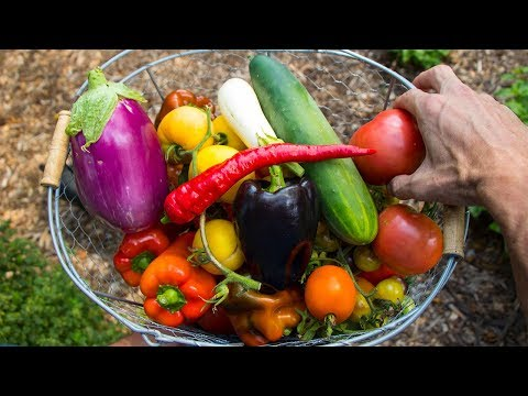 Organic Gardening Harvest, Backyard Food Forest