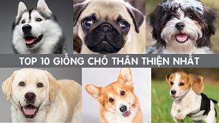 TOP 10 Giống Chó Thân Thiện Với Gia Đình Và Trẻ Nhỏ