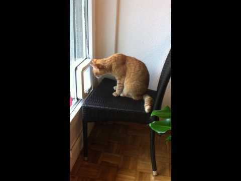 Hurra !! Mausi hat die Katzenklappe kapiert...