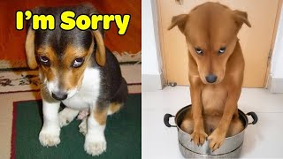 Guilty DOG Face Reaction  Guilty Dogs Video Compilation 2021