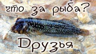 Рыбалка на Чёрном море с берега морской карась зеленушка барабуля бычок и неизвестная рыба Fishing