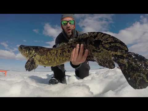 Last Ice TROPHY Burbot and Big Lake Trout Day 1