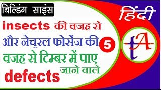 Defects in timber due to Insects and natural forces - Timber-5