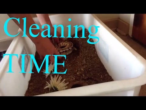 Cleaning 5 Snake Cages