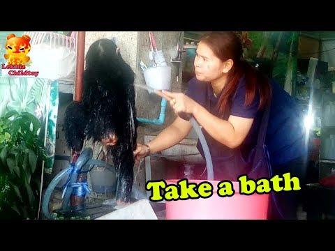 Oh Chimpanzee Monkey !!!Take A Bath  And Kiss Me  @Samutprakarn Zoo