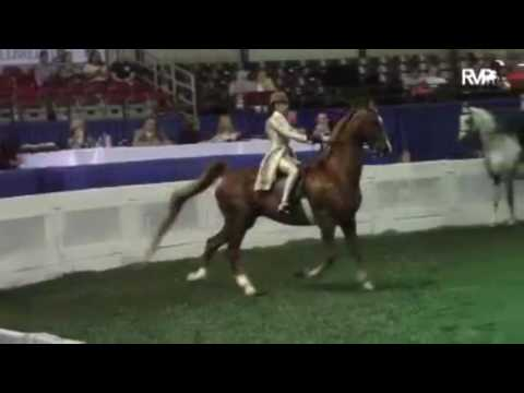 Olivia Dapolite 2017 Saddleseat Young Riders Application Video.