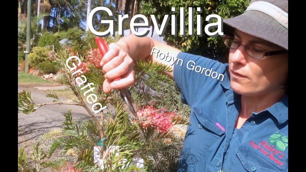 how to make gumpaste australian native flowers