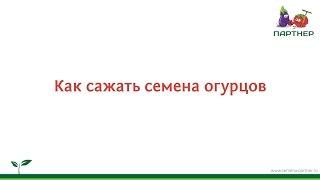 Как сажать семена огурцов(Рассказывает Николай Петрович Фурсов, кандидат сельскохозяйственных наук, эксперт агрофирмы