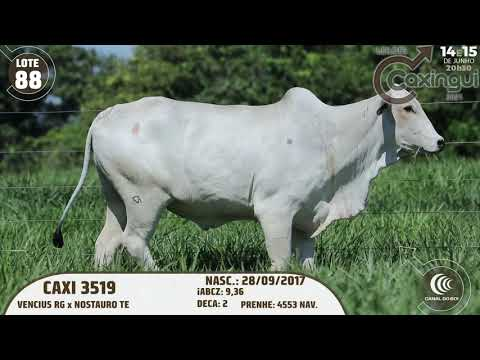 LOTE 88   CAXI 3519