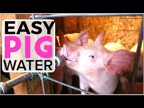 Automatic Pig Waterer - How to install