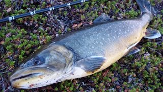 fishing in finnmark september 2014